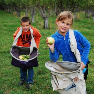 Apple Picking and Meal Plans