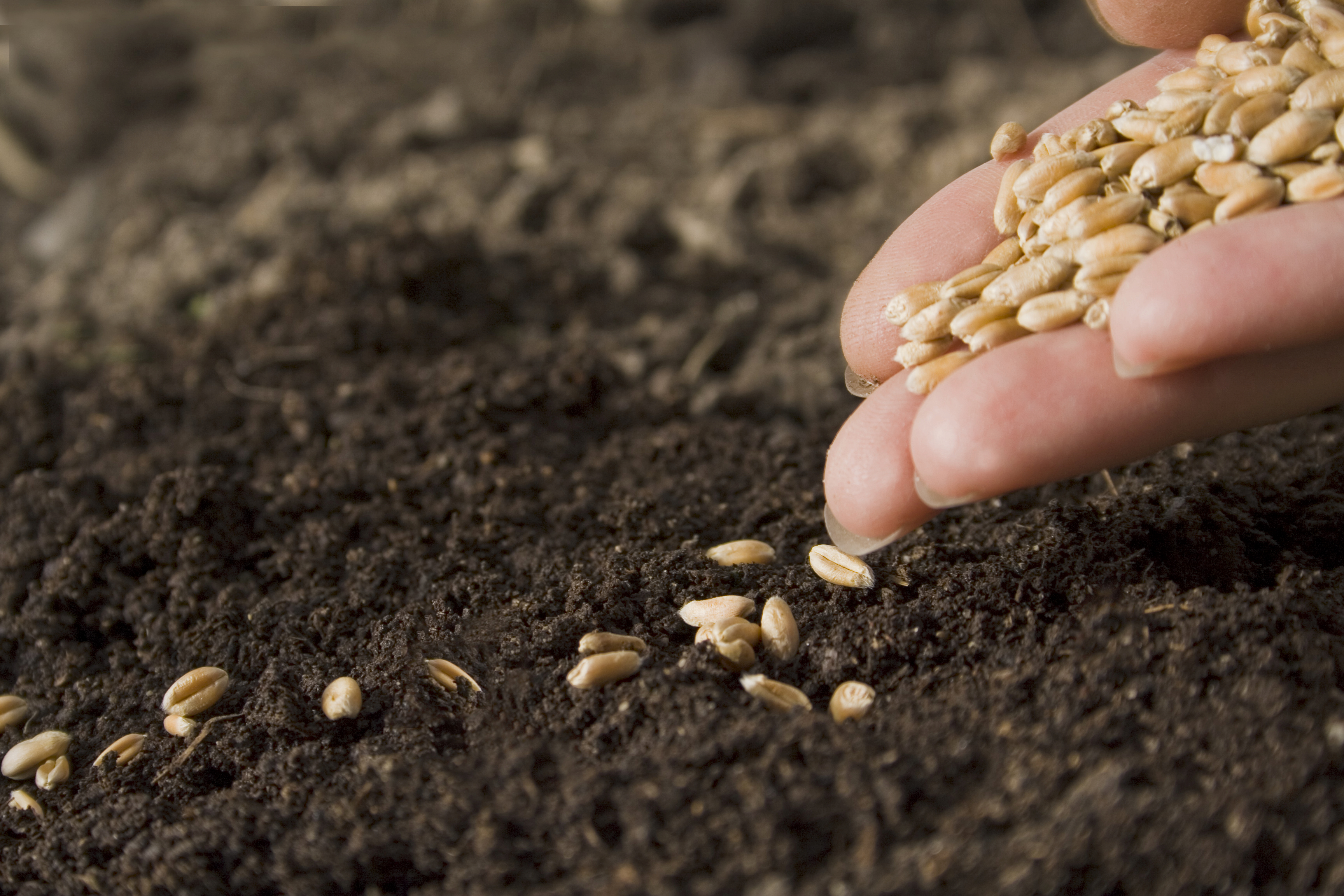 Garden Vegetable Seed Buying Guide | Healthy Ideas for Kids