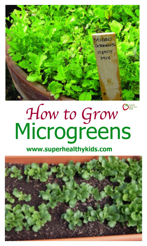 How to Grow Microgreens. Here's a complete guide to microgreens!