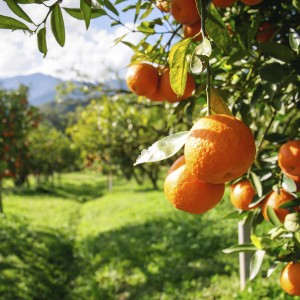 Vit C – Why Is It So Vital?