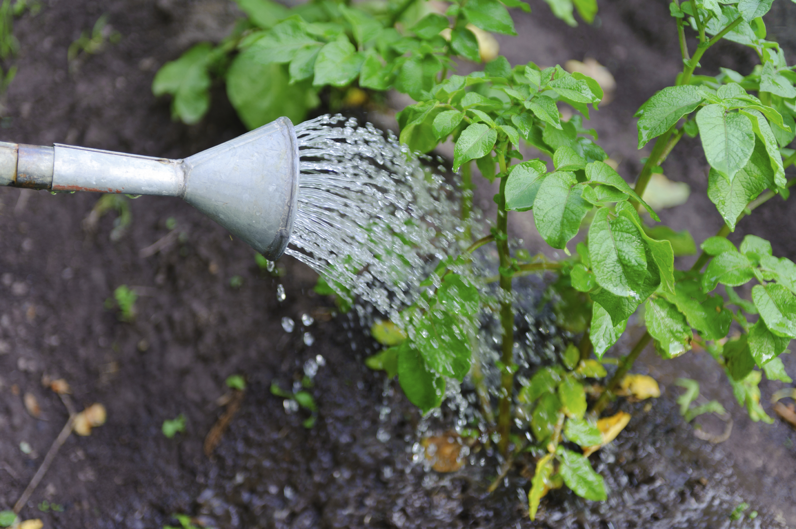 5 tips for the every day gardener for Watering vegetable garden