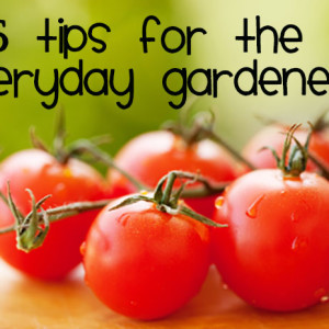 5 Tips for the Every Day Gardener