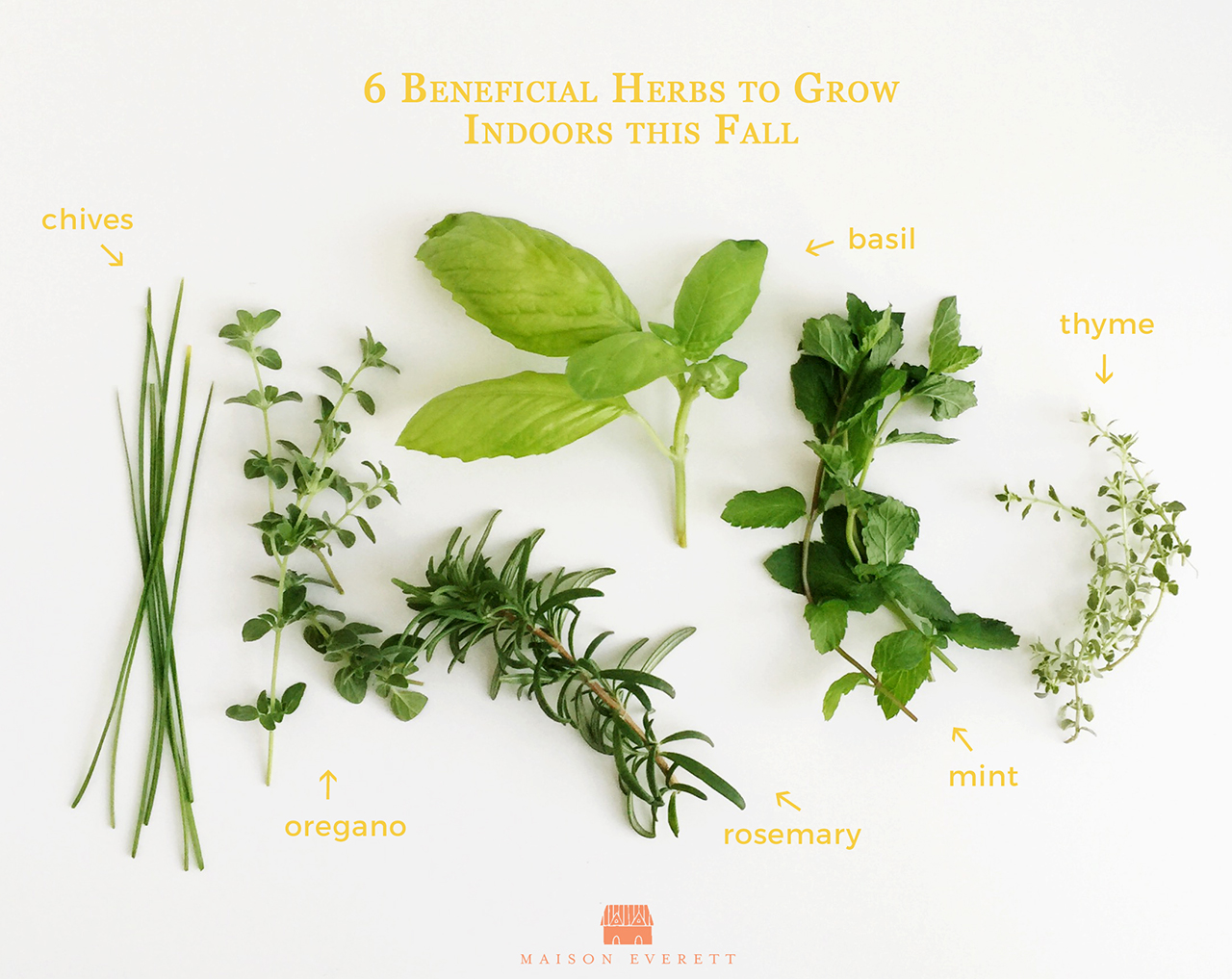 beneficial herbs to grow indoors this fall, Natural flower