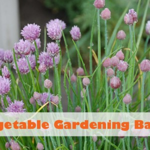How To: Vegetable Gardening Basics