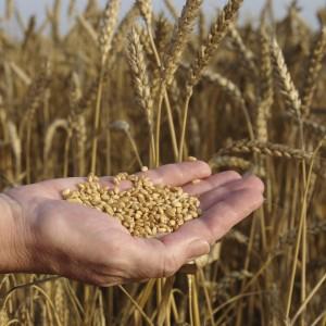 Nutrition Lesson Plan: Whole Grains
