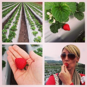 Berries: From Farm To Table